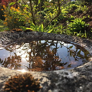 Bewachsene Gartenschale