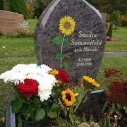 Einzelstein mit farbenfroher Sonnenblume